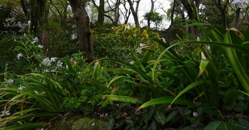 花の大山崎山荘で漱石先生と会う。