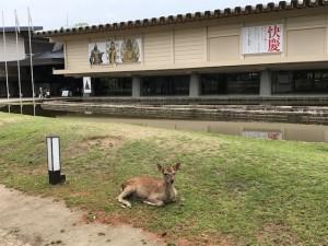 必見!『快慶 日本人を魅了した仏のかたち』展 奈良国立博物館にて
